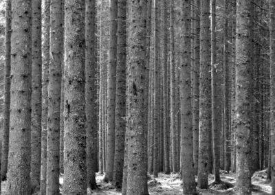 Forêt de Long Island